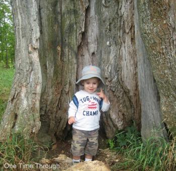 Magic Tree Spot