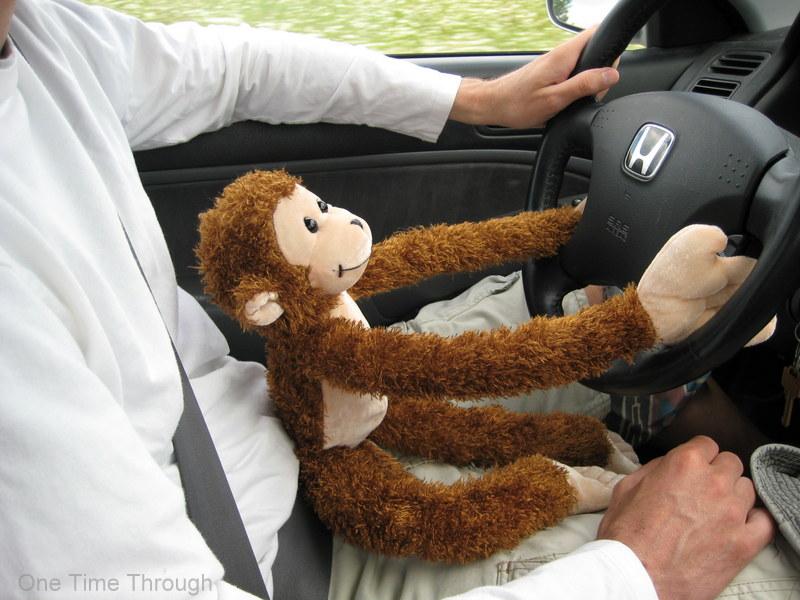 Monkey Driving