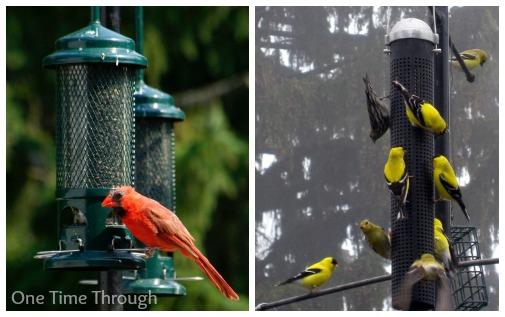 Nature Loving Birds