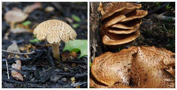 Fungi Hunt Mushrooms