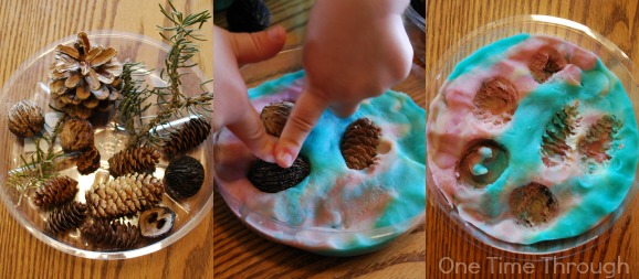 Imprinting Trees in Playdough