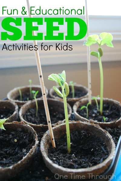 Fun and Educational Seed Activities for Kids