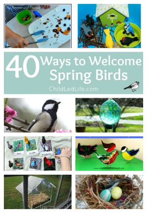 Spring-Birds-Collage