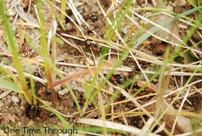 Examining Ants