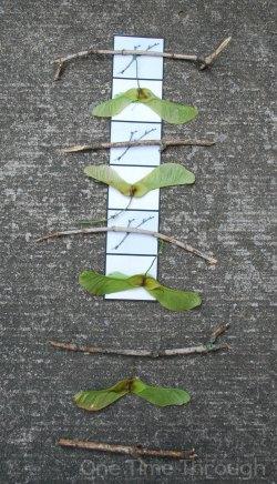 AB Nature Pattern