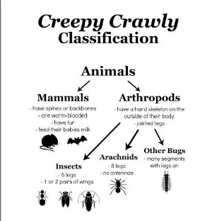Creepy Crawly Classification Picture