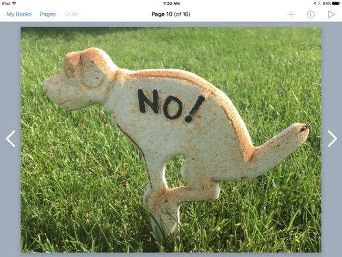 Funny No on Dog
