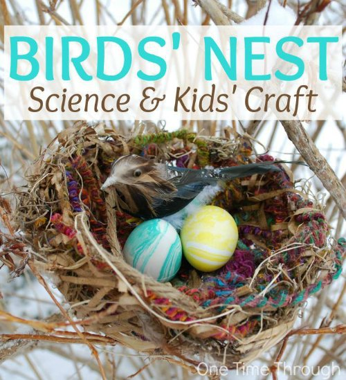 birds nest craft for kids